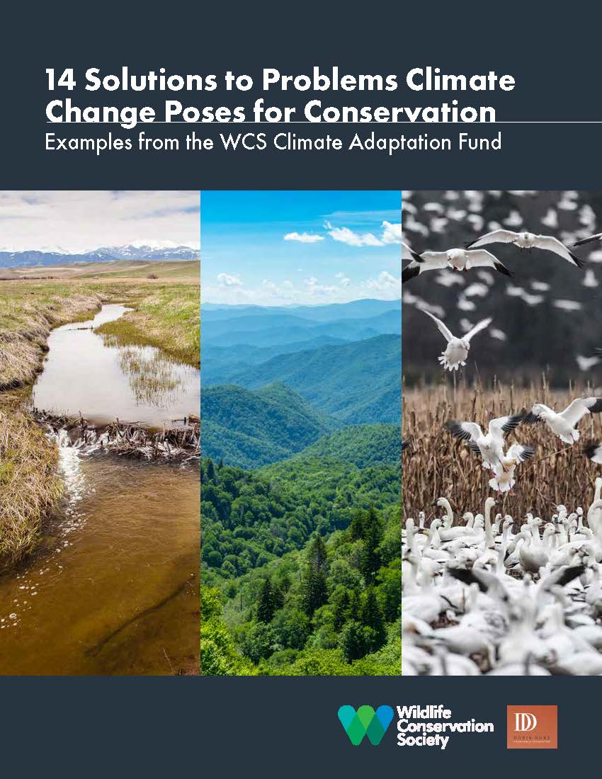 14 Solutions to Problems Climate Change Poses for Conservation   Describes several climate-driven problems that are projected to affect, or are already affecting, particular wildlife species and ecosystems, and solutions that conservation groups are implementing to help plants and animals respond and adapt.