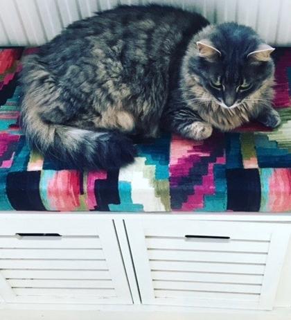 cat pet bed bespoke custom window bench seat box Kaleido cushion warwick sussex sale made to measure.jpg