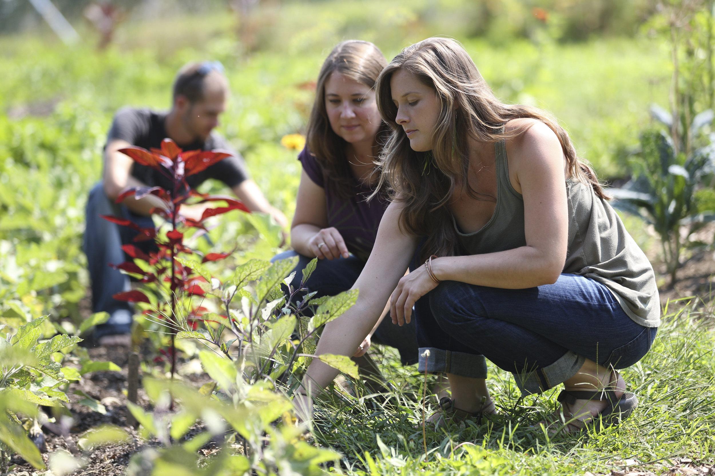 Agricultural Assistantships -