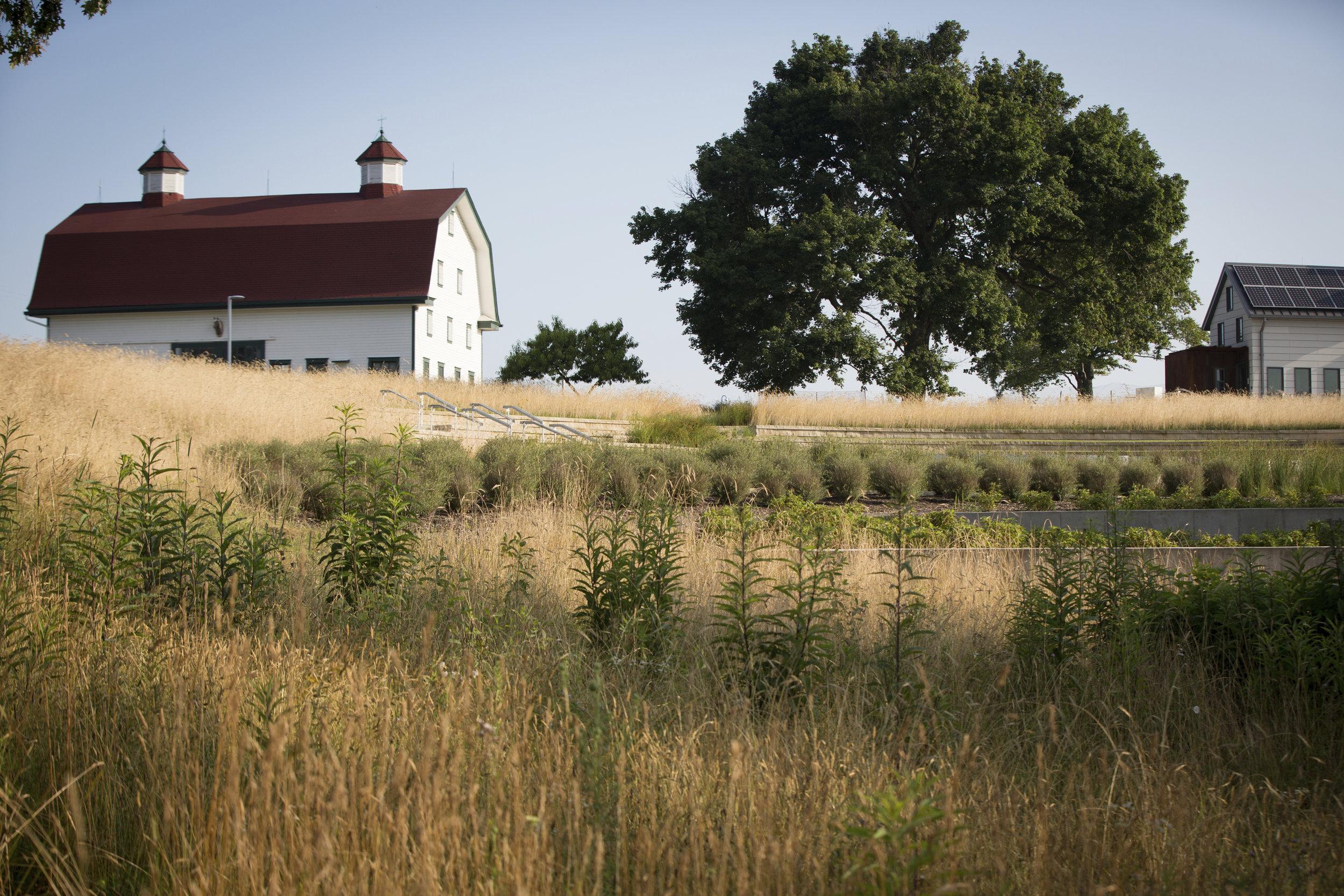 FARM & FIELD -