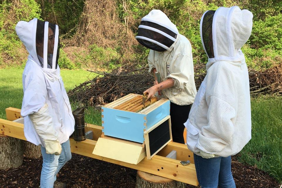 ehc-apiary.jpg