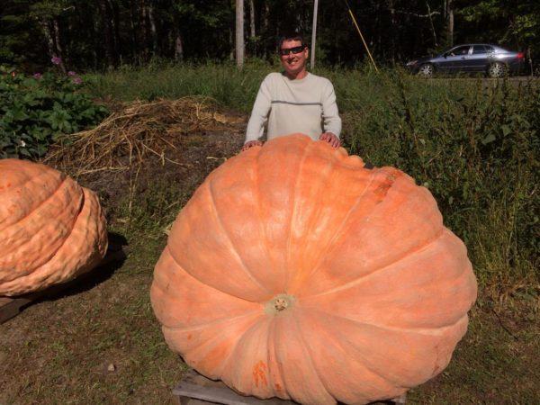 That's a big pumpkin.