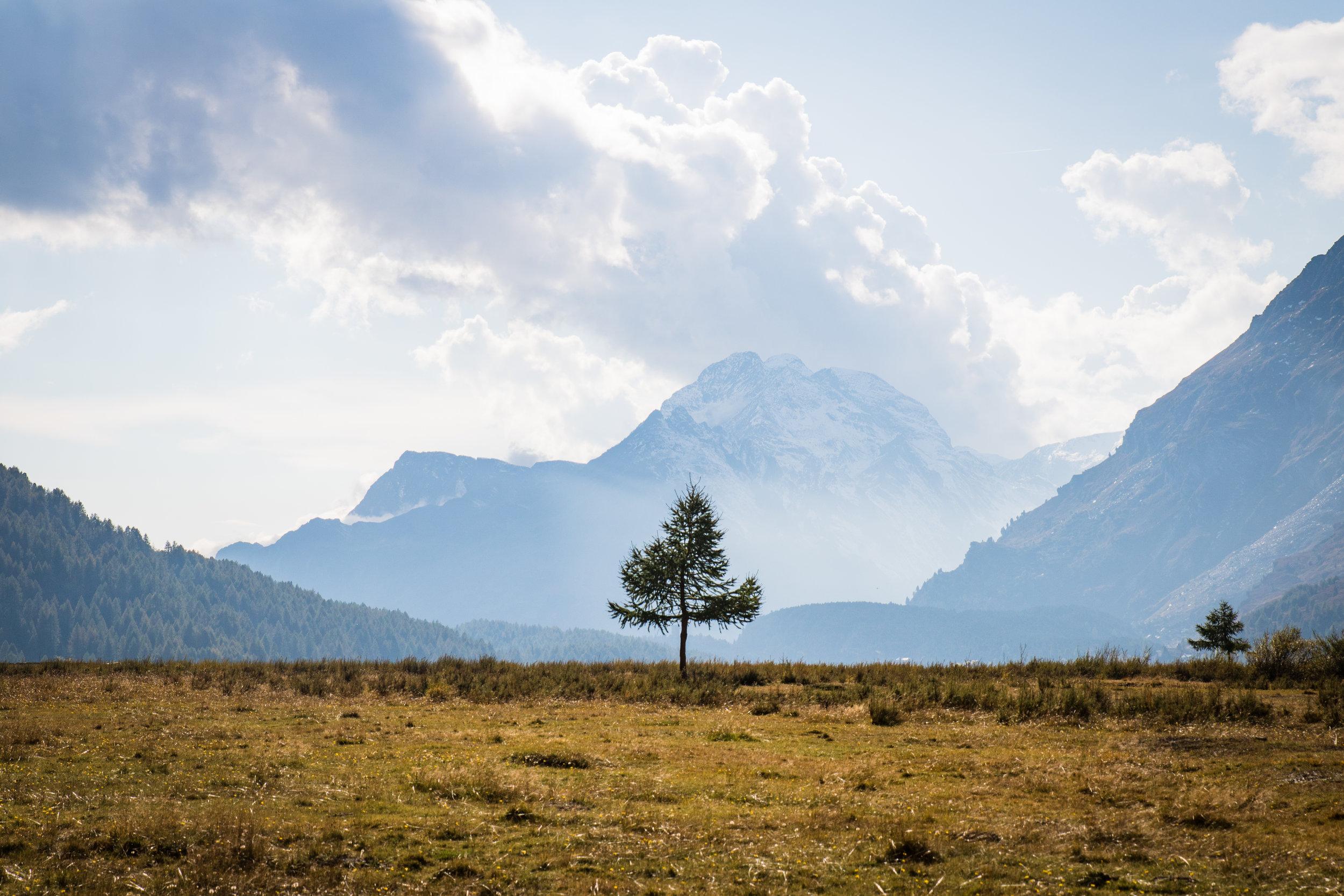 Baum im Engadin