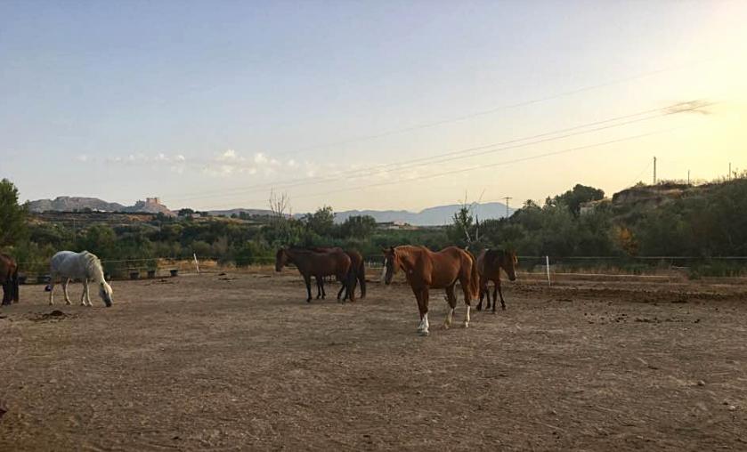 The horses at Jacobs Ridge