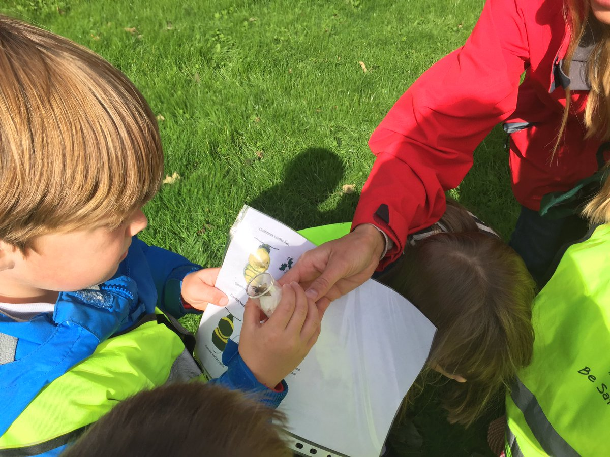 Very interested children to learn about the vast variation of the bumblebees
