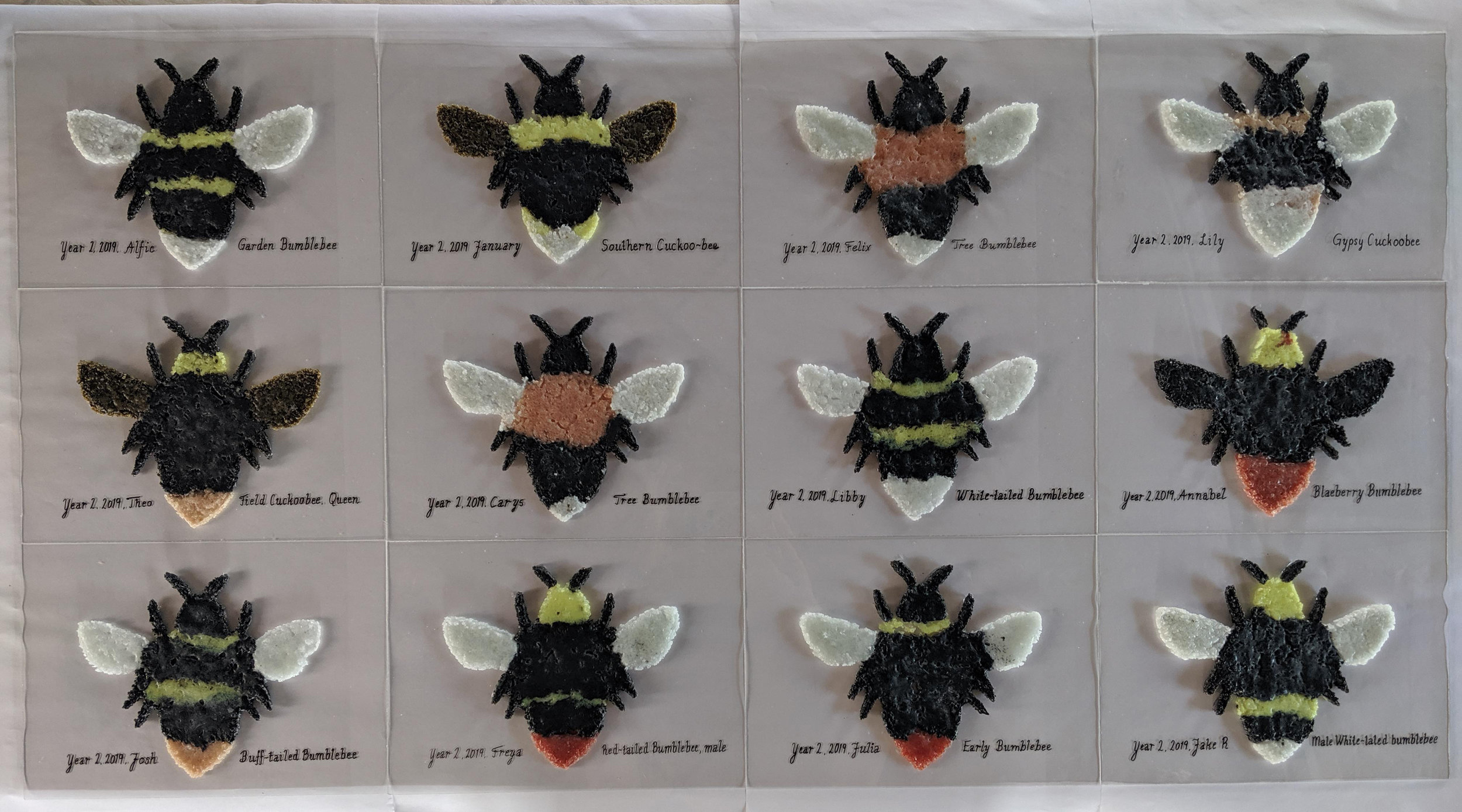 All bumblebees are made by Year 2 schoolchildren