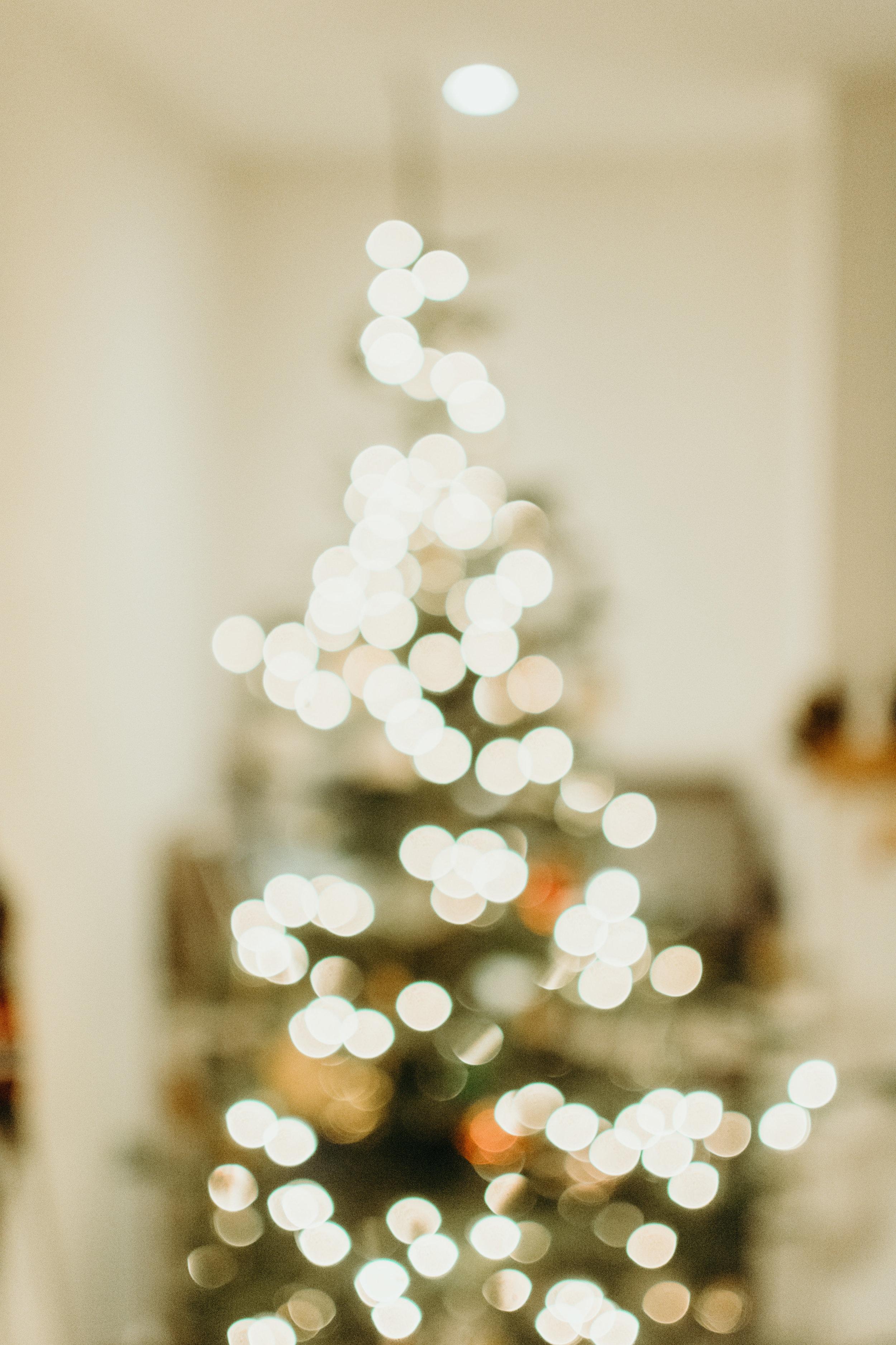 Sustainable Christmas - Madison Jamie Photograhpy - @madisonjoue-1782.jpg