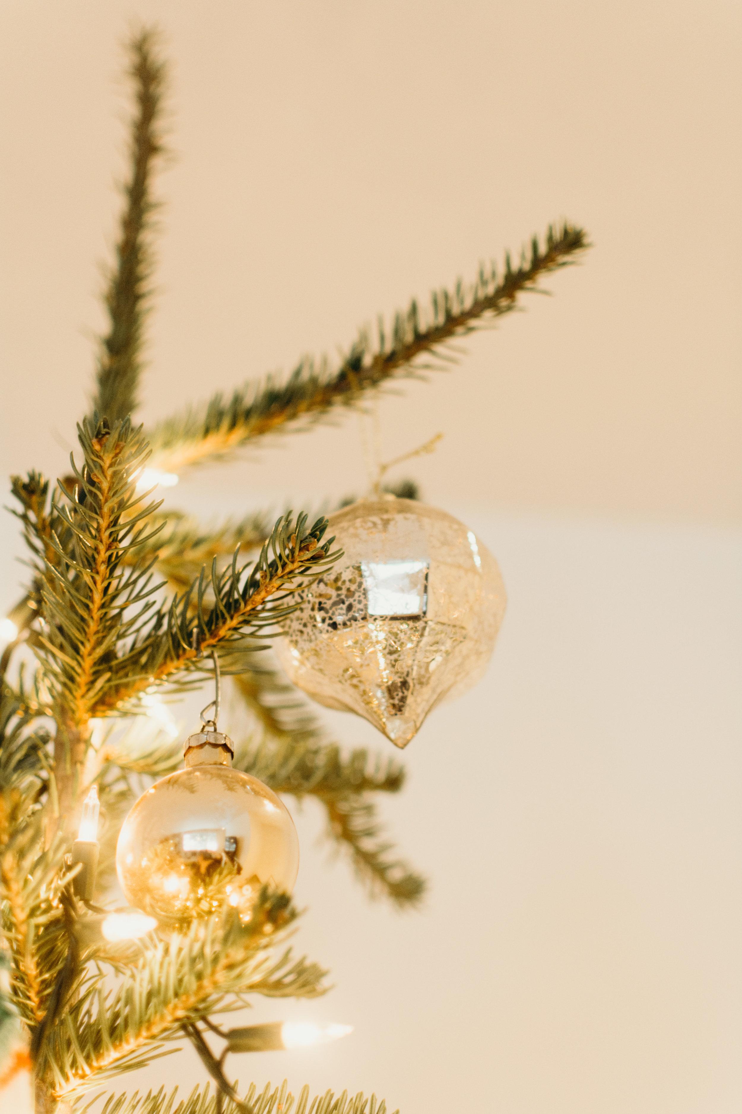 Sustainable Christmas - Madison Jamie Photograhpy - @madisonjoue-1733.jpg