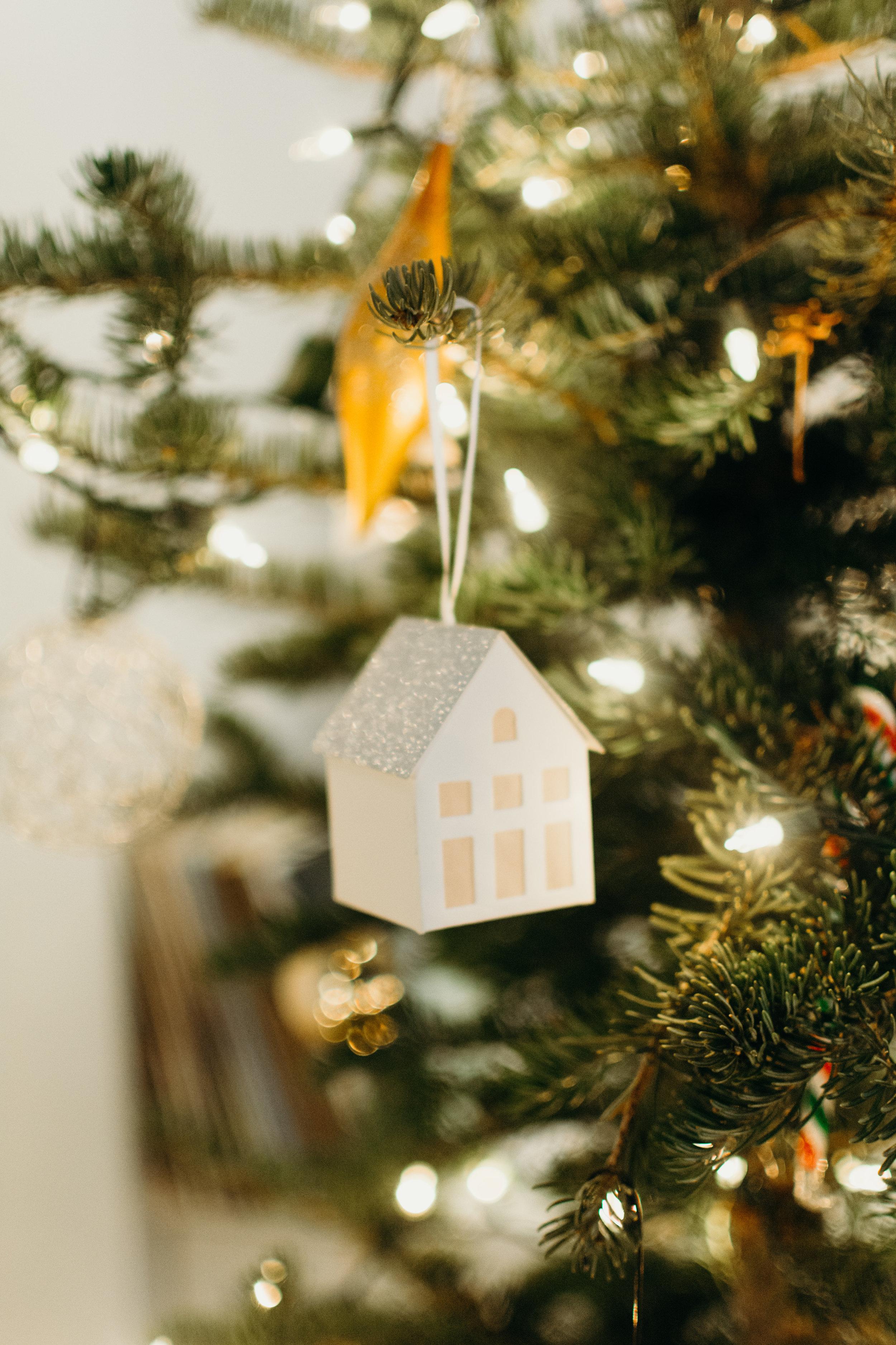 Sustainable Christmas - Madison Jamie Photograhpy - @madisonjoue-1739.jpg