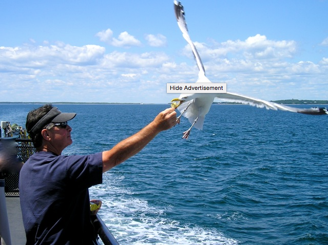 Nickw:seagull 2.png