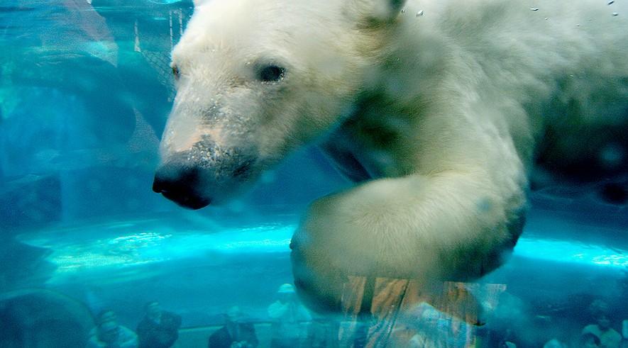 polarbears-environment-7180cf93-885x491_q90_box-016030001825_crop_detail.jpg
