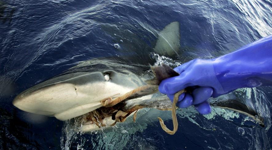 sharks-hawaii-309b509b-885x490_q90_box-05731481800_crop_detail.jpg