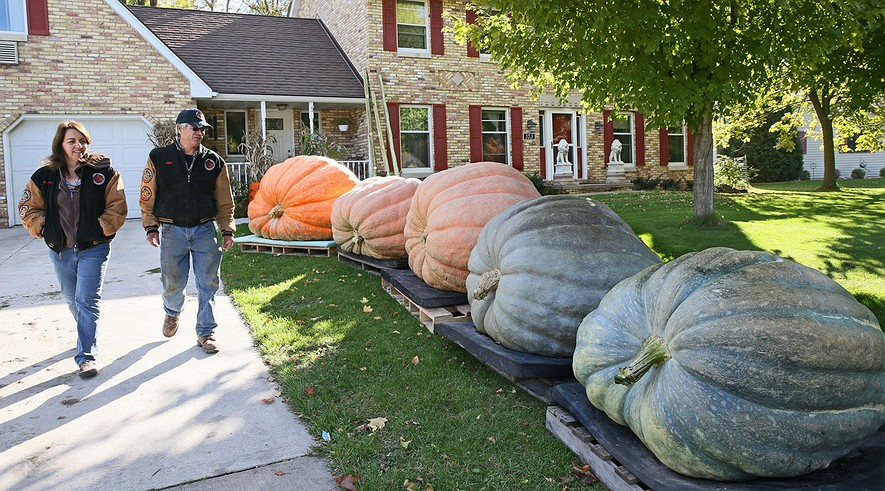 giant-pumpkins-30558c66