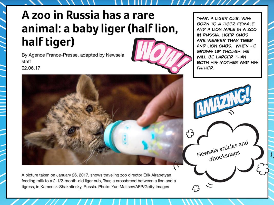 a-zoo-in_orig.png