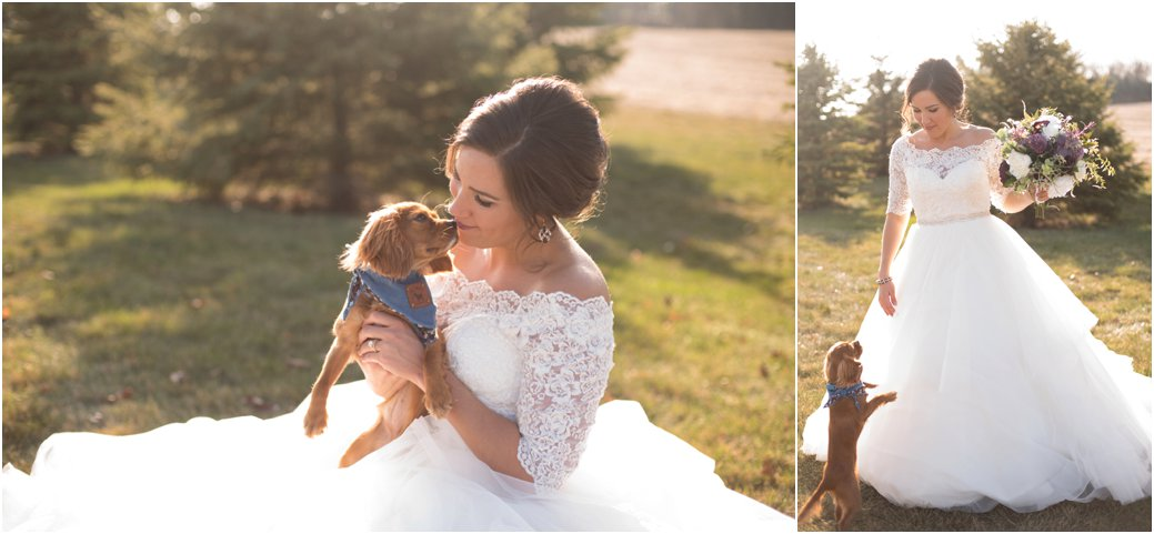 red coat king charles spaniel puppy with bride