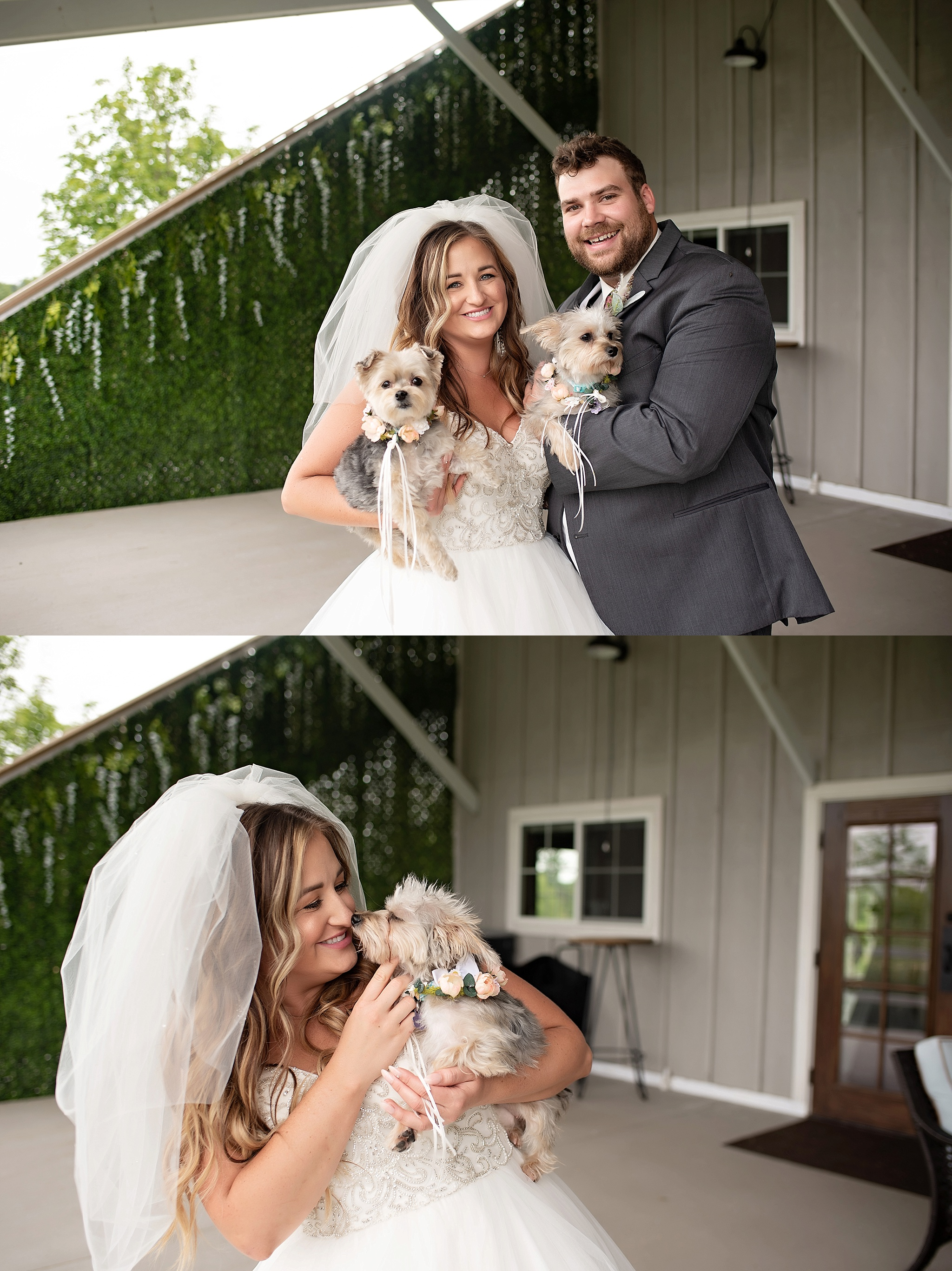 bride and groom with their puppies before the ceremony