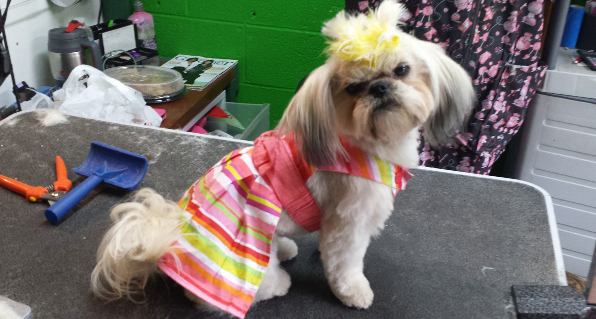 Pink-Lady-dog.jpg