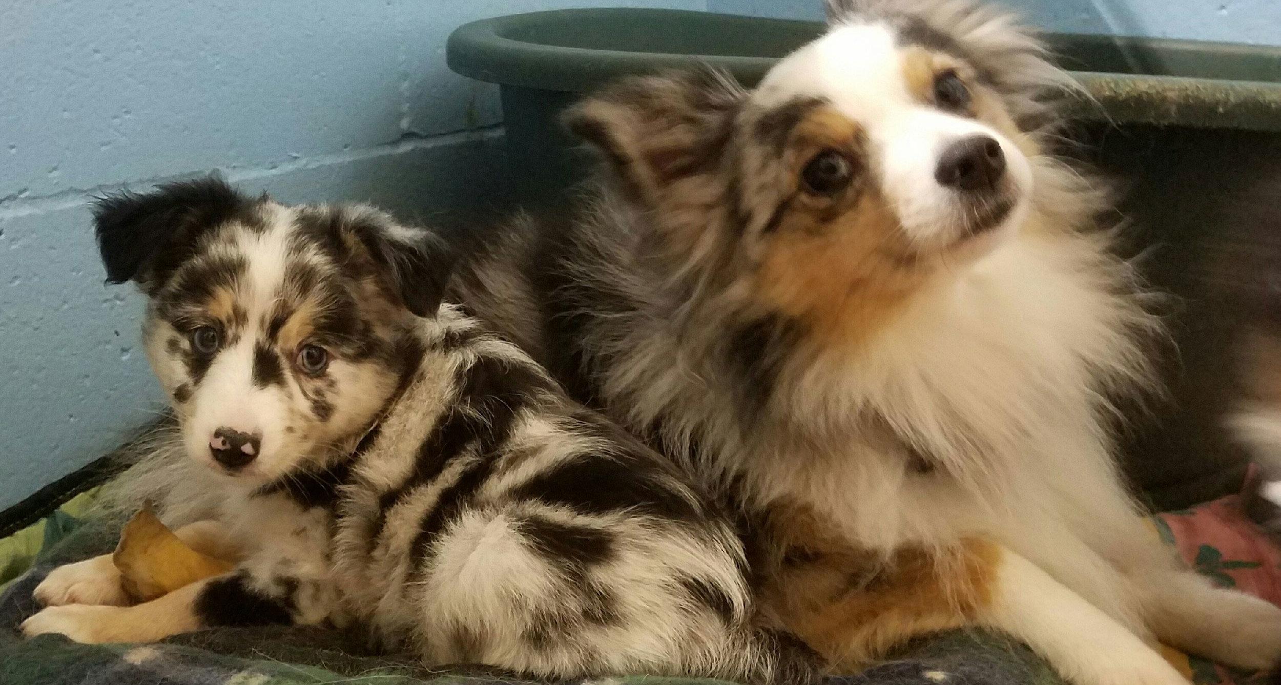 Cute-Puppy-Face.jpg