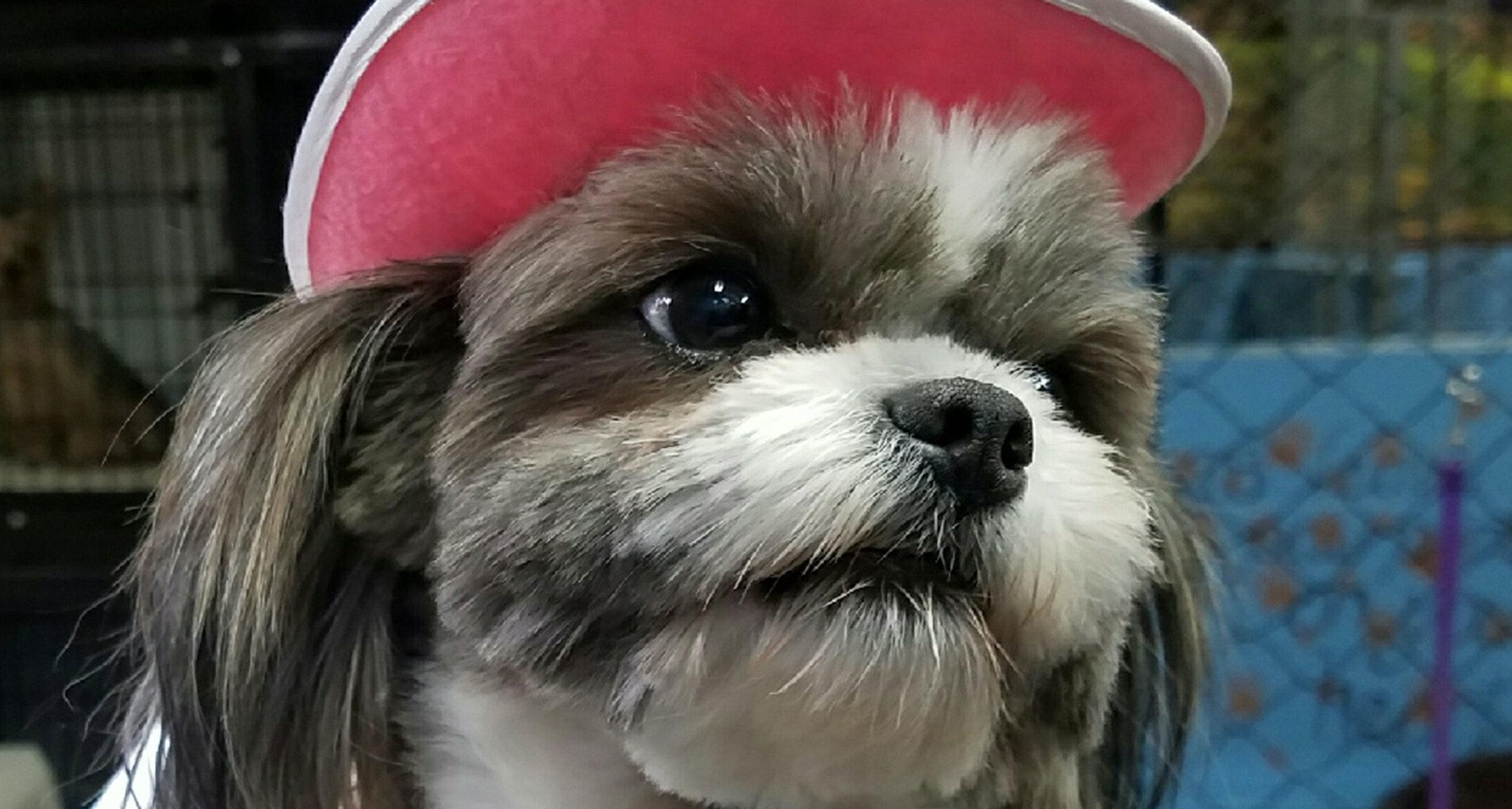 Cute-Hat-Doggy.jpg