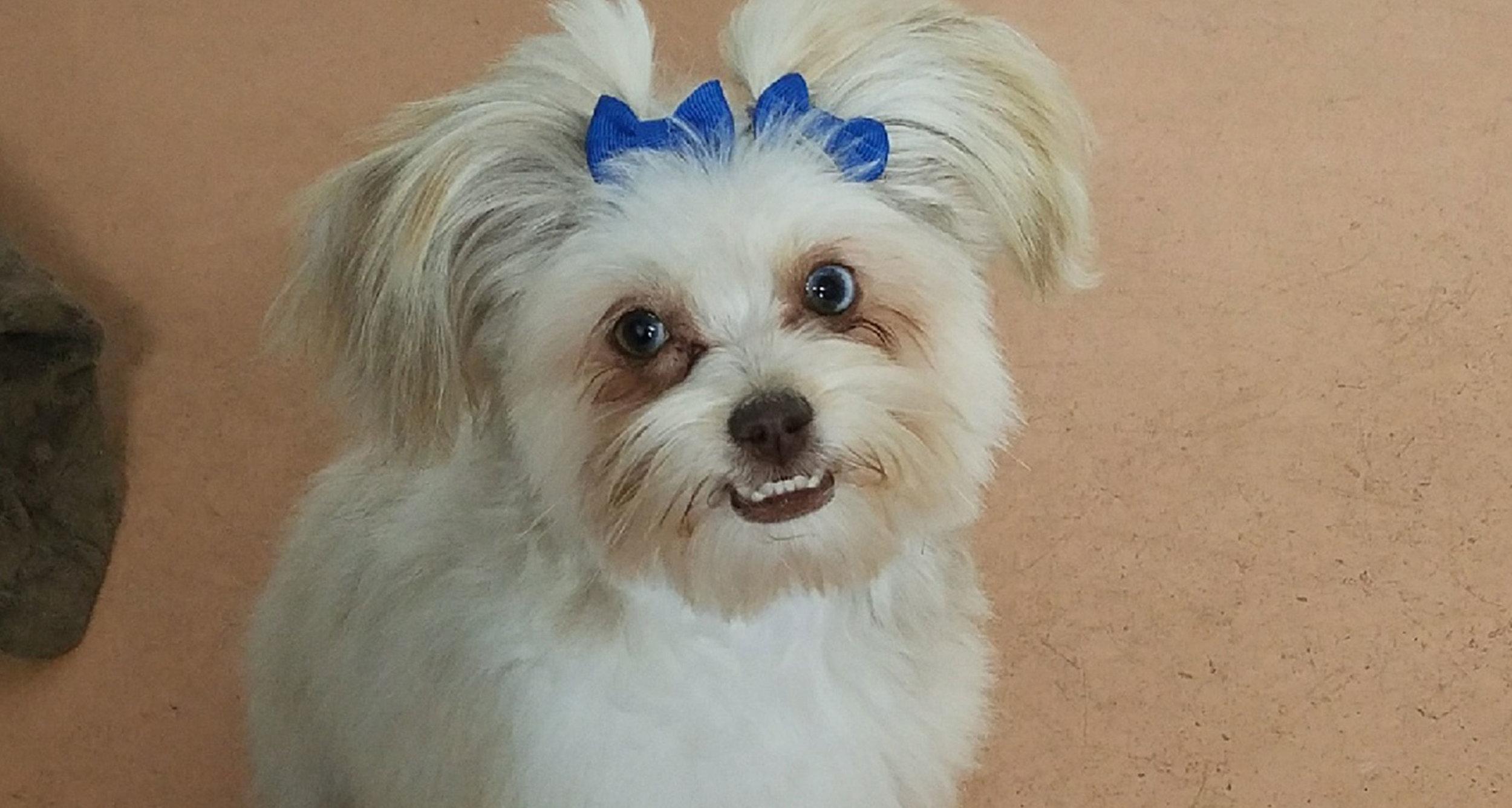 Tiniy-Happy-Pup.jpg
