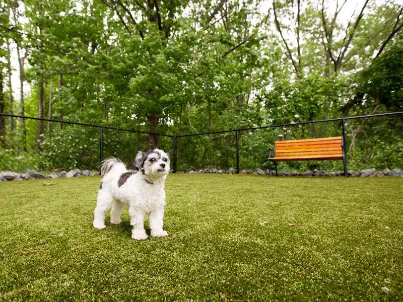 Pet Park Dog.jpg