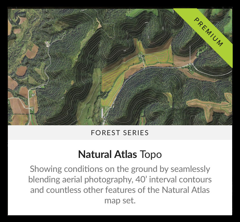 Map-Style-Forest-topo.jpg