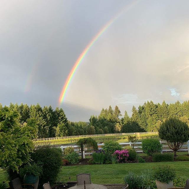 Lucky pot of gold in the vineyard