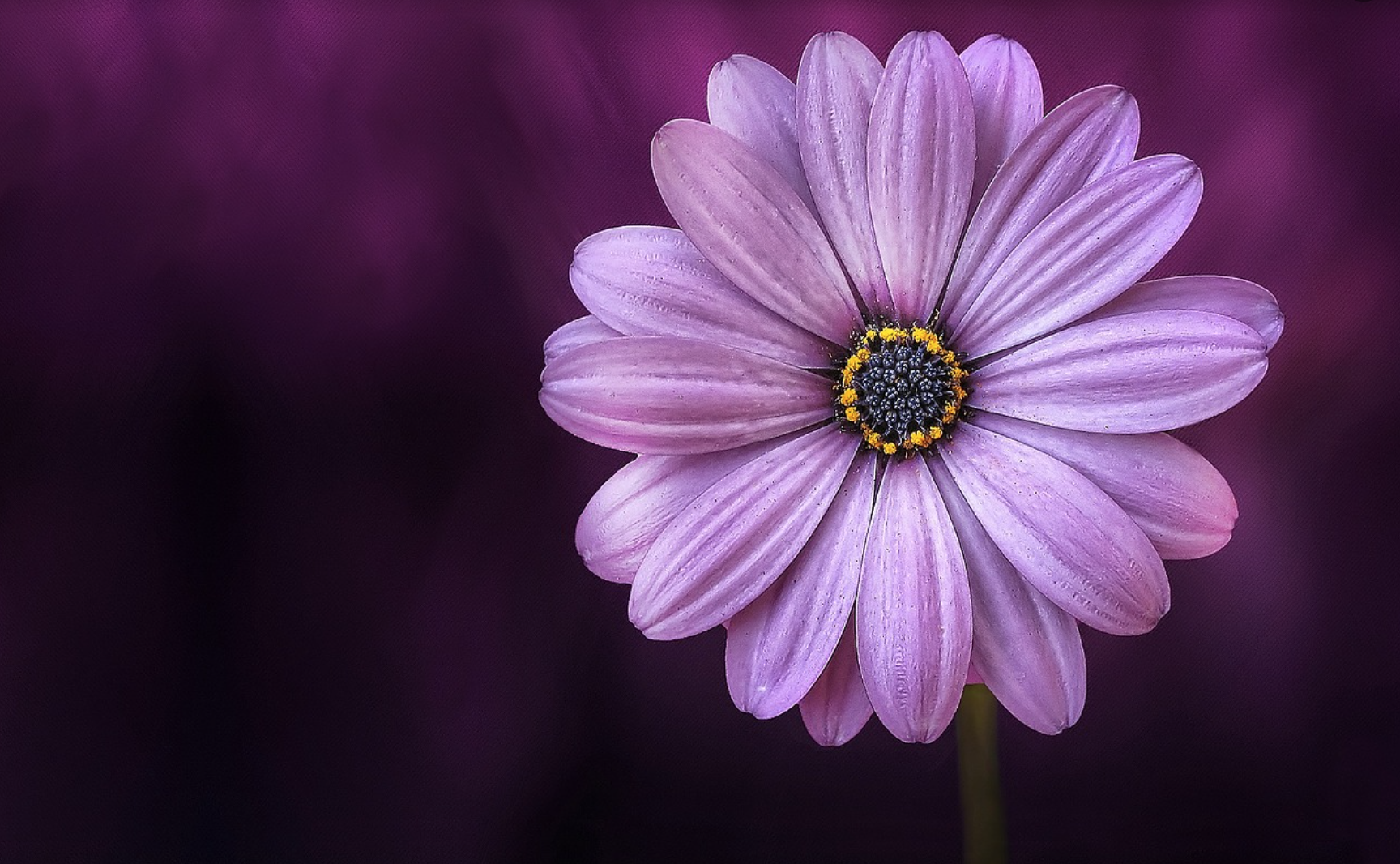 PIC PURPLE FLOWER.png
