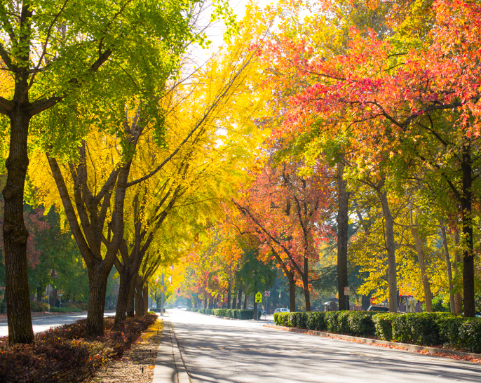 Esplanade in the Fall .jpg