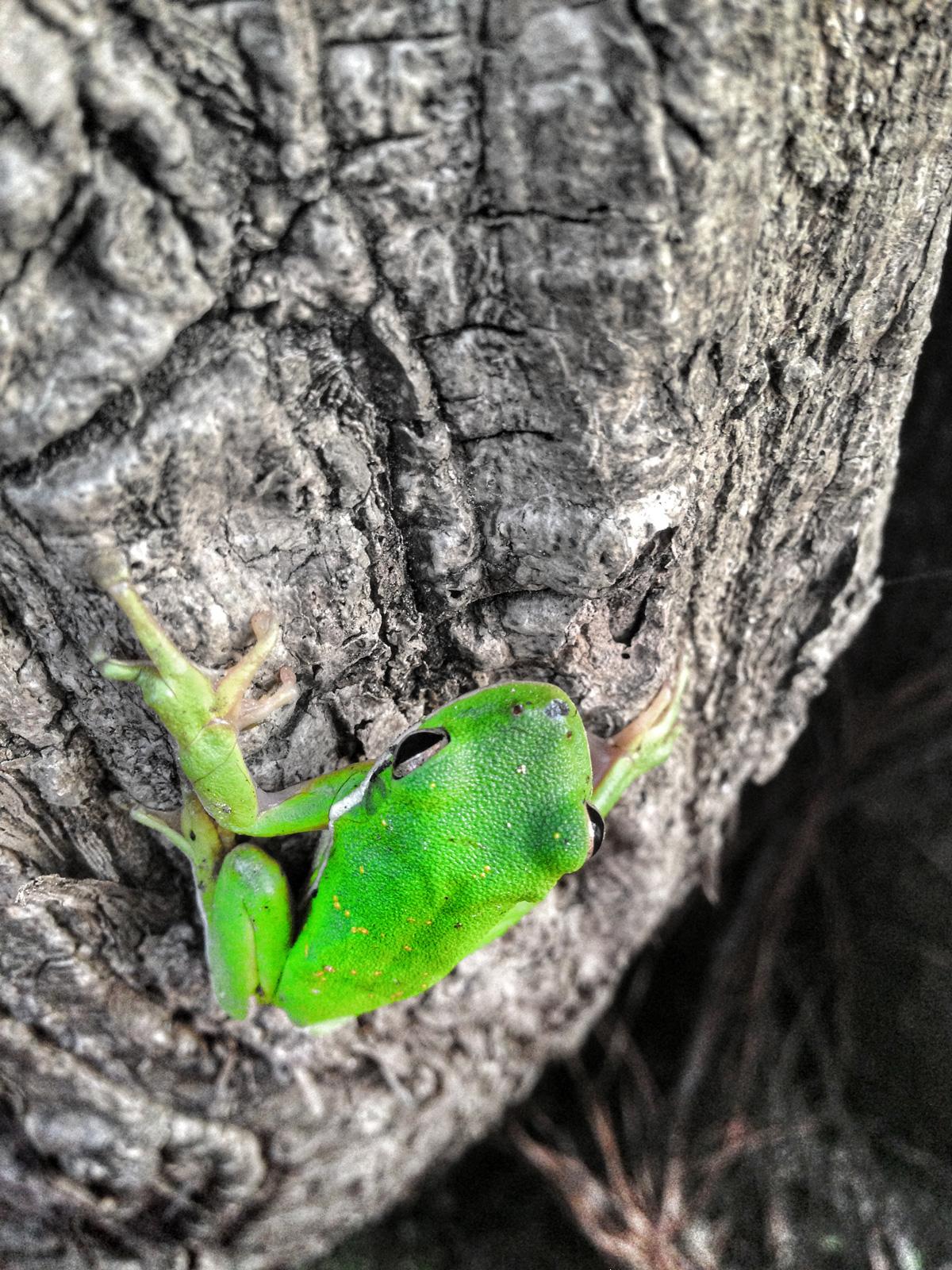img-frog.jpg