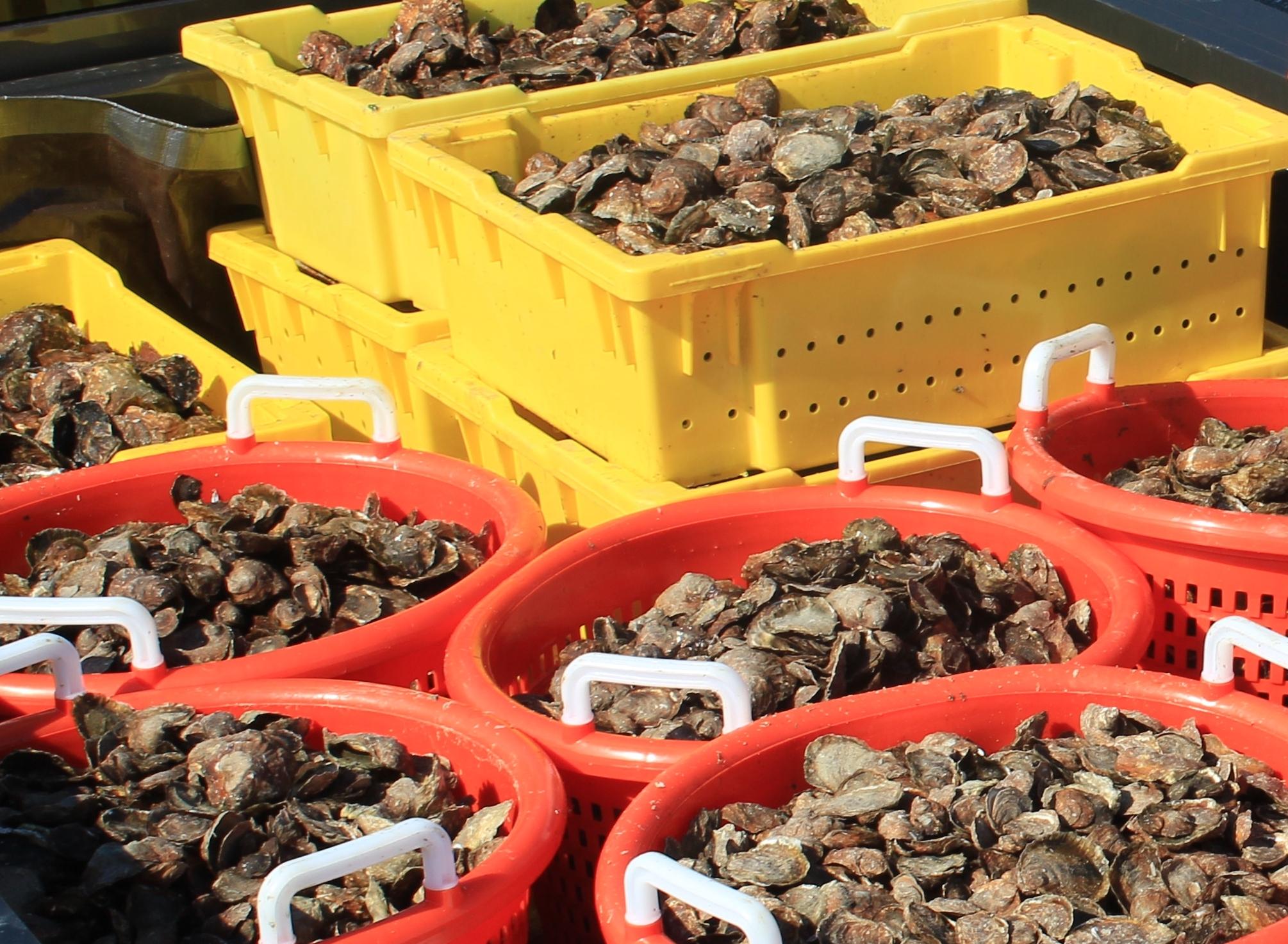 Scnd Plnt oyster bushels.JPG