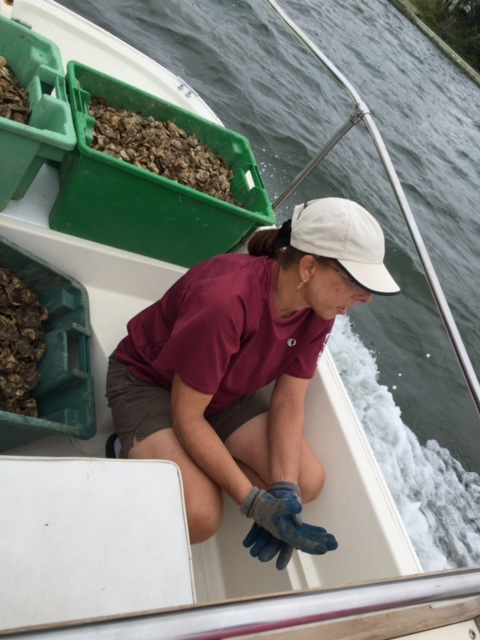Beth getting ready to plant oysters.JPG
