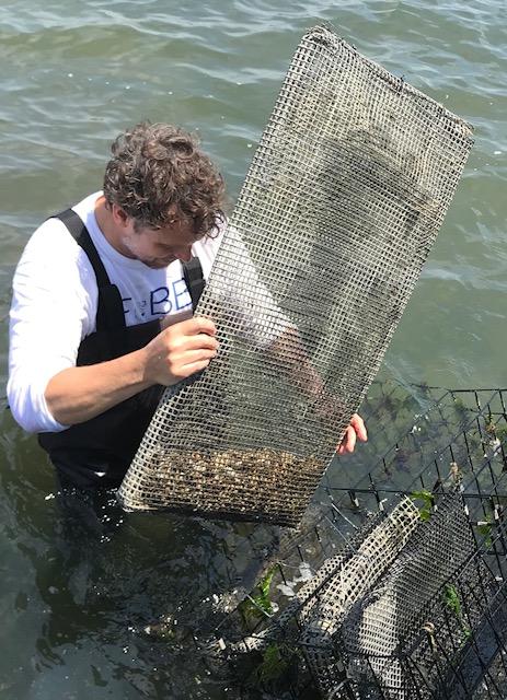 Tom oysters in envelope June 2 2018.jpg