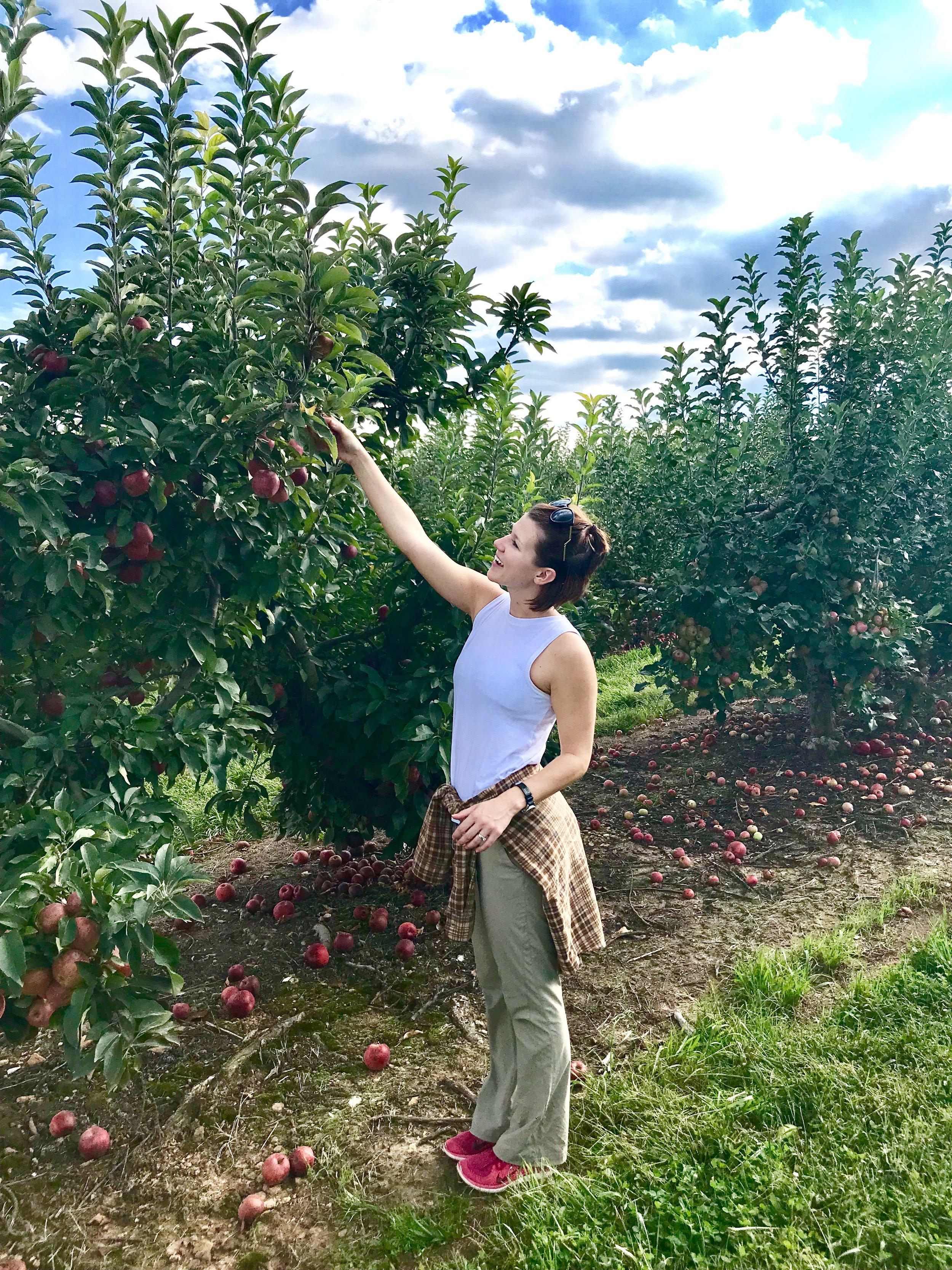 GA apple orchard.jpg