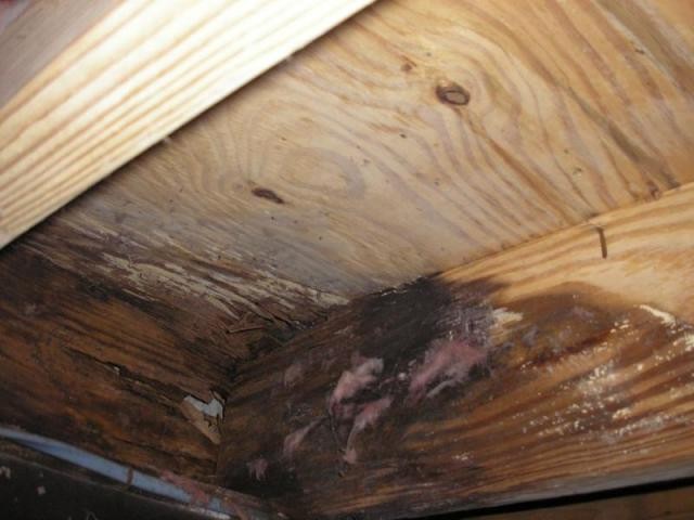 rotten joist  Rotten floor joist and band joist at the front and rear door areas visible inside the crawl space.