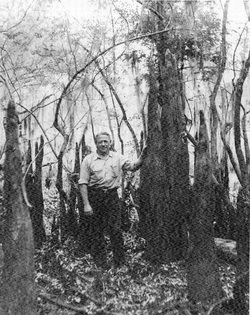 Daddy in the Big Cypress. That's a cypress knee.