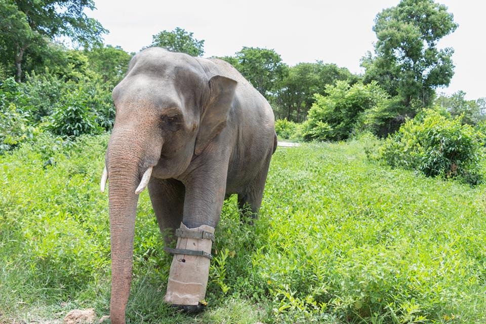 elephant-missing-leg.jpg