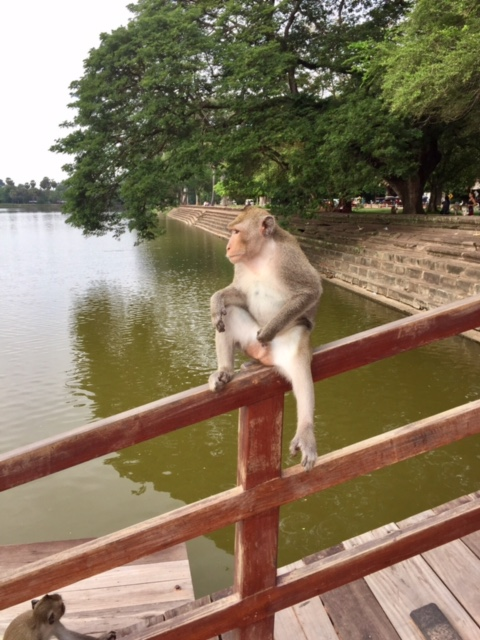 Inappropriate macaque on the bridge outside of Angkor Wat.