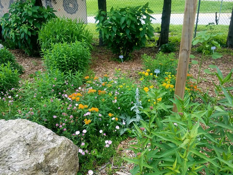 Goebel Park Pollinator Flower Garden #2.jpg