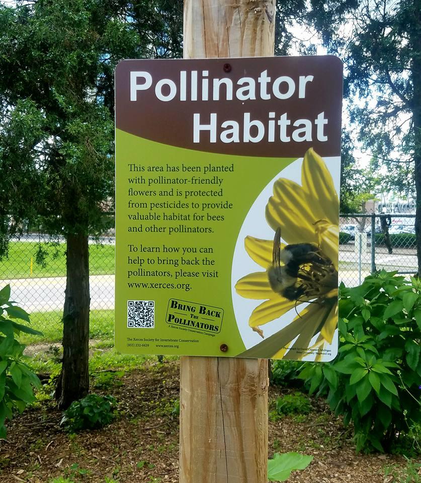 Goebel Park Pollinator Habitat.jpg