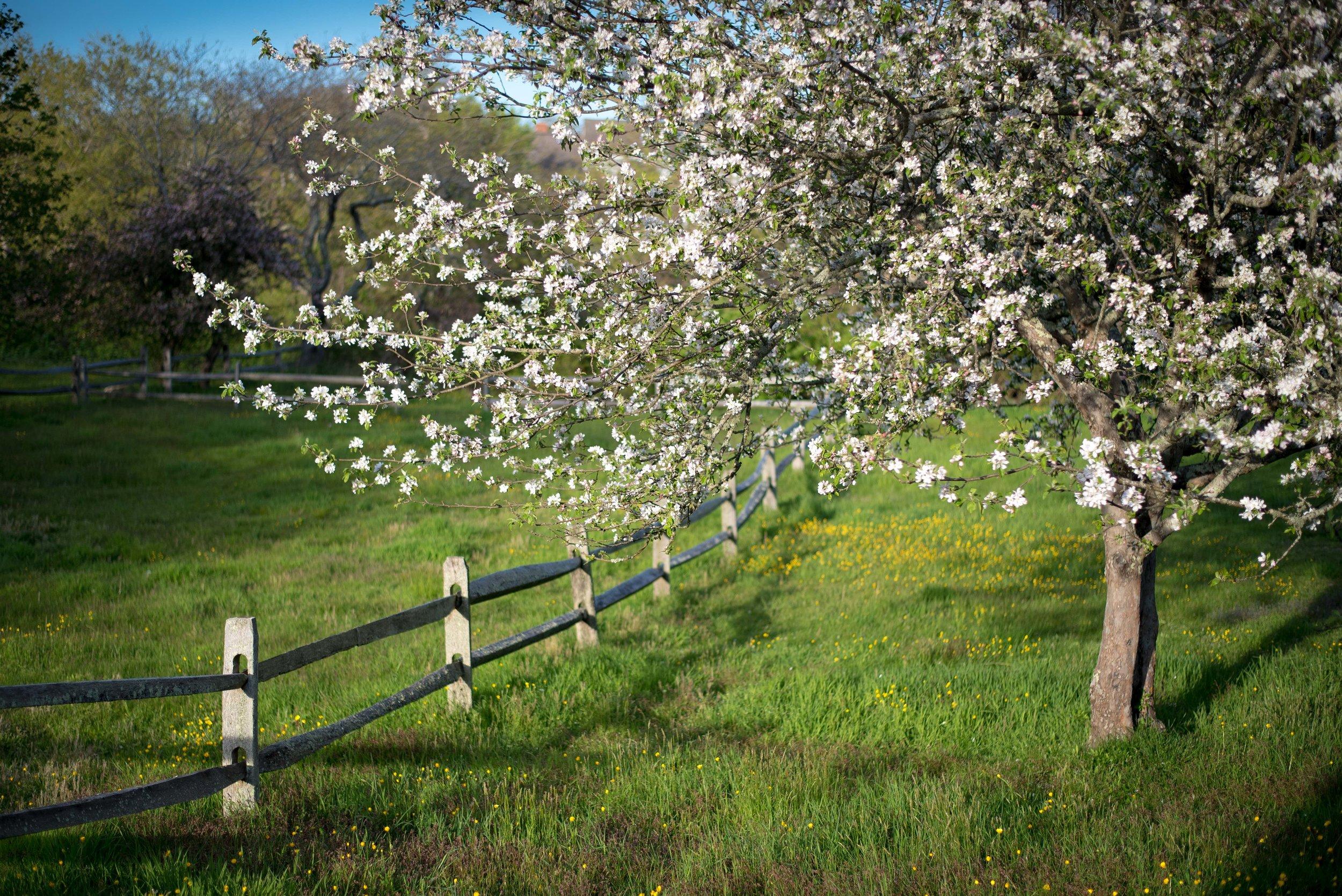 Spring, Nantucket, MA