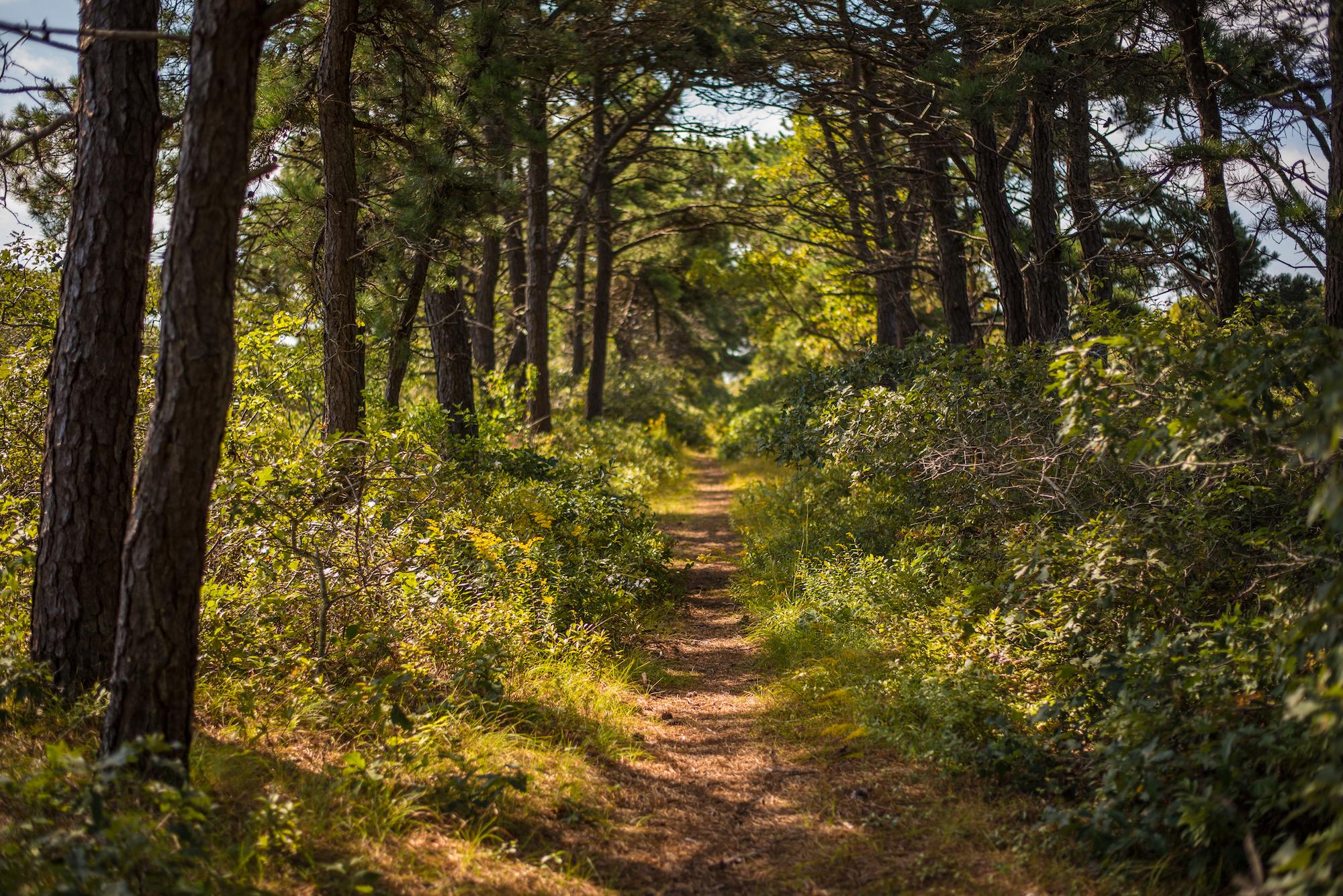 Conservation Land, Nantucket, MA
