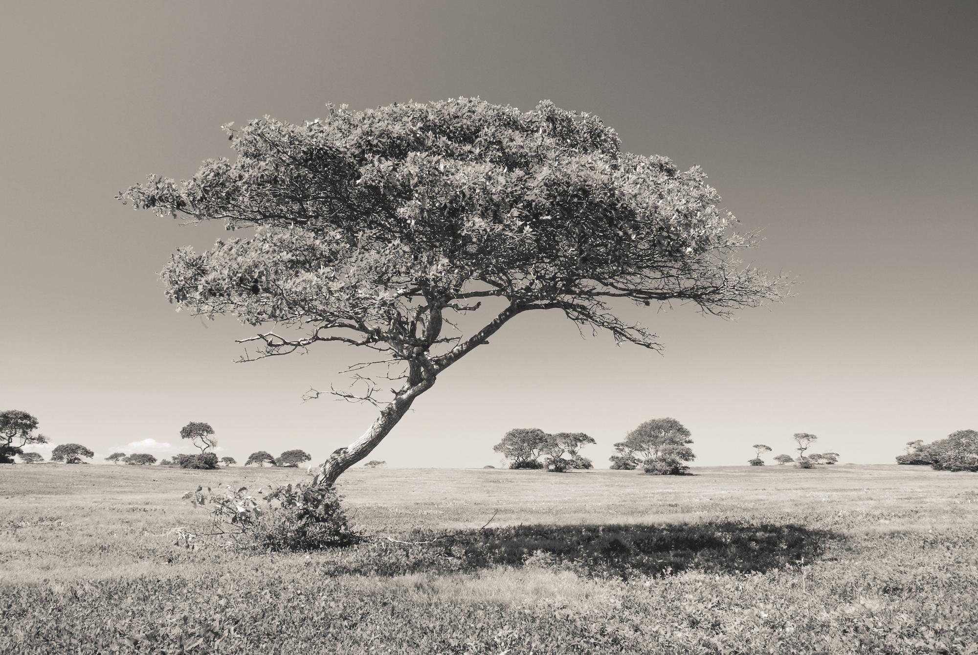 'Serengeti', Nantucket MA