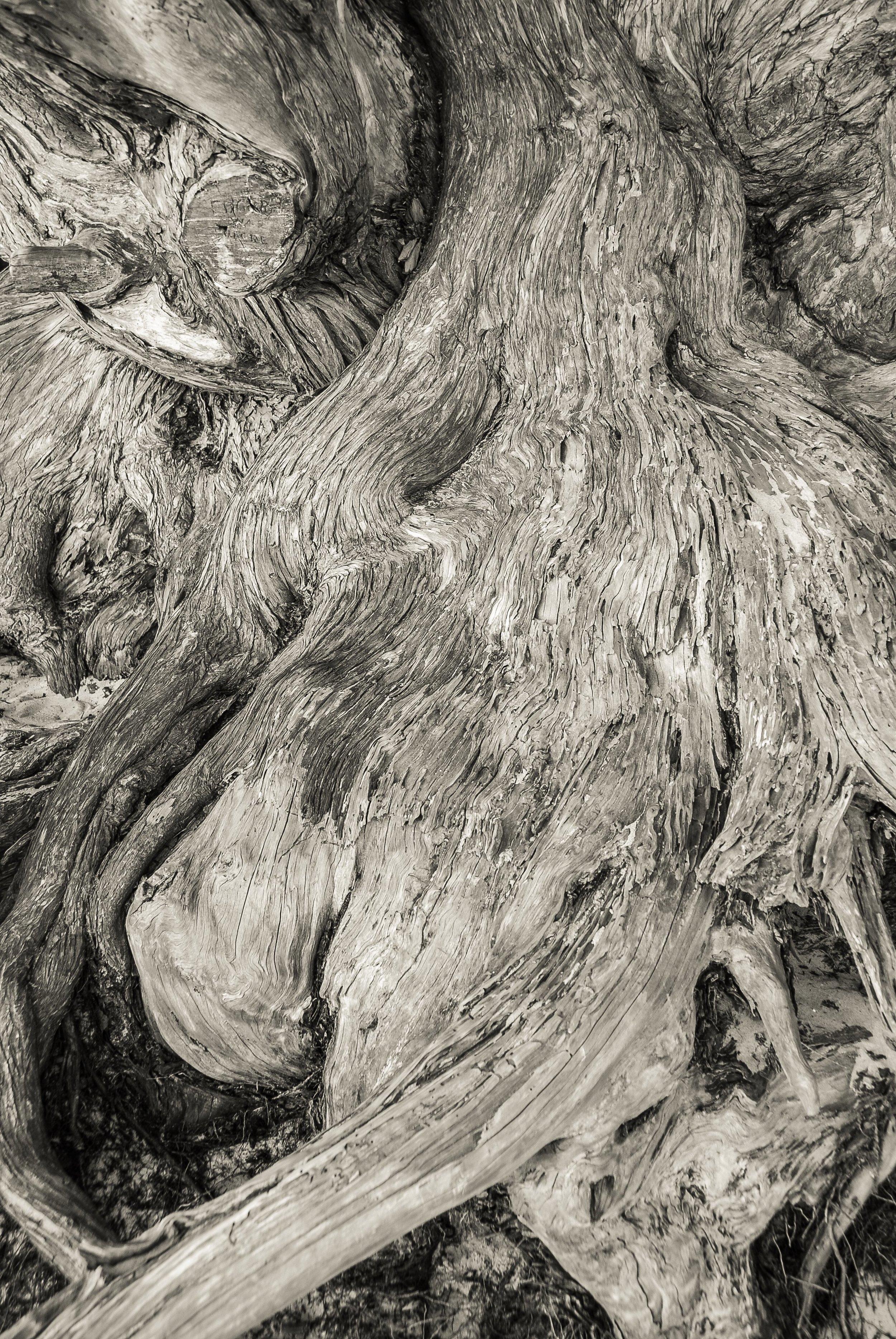 Cypress, Pebble Beach, CA
