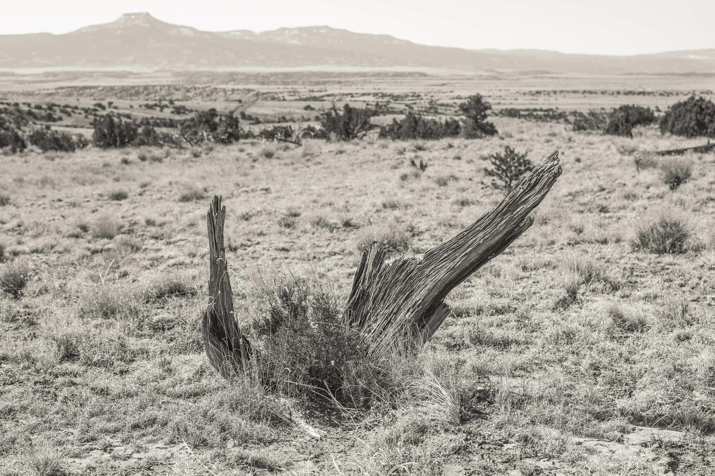 Ghost Ranch I, Abiquiu, NM