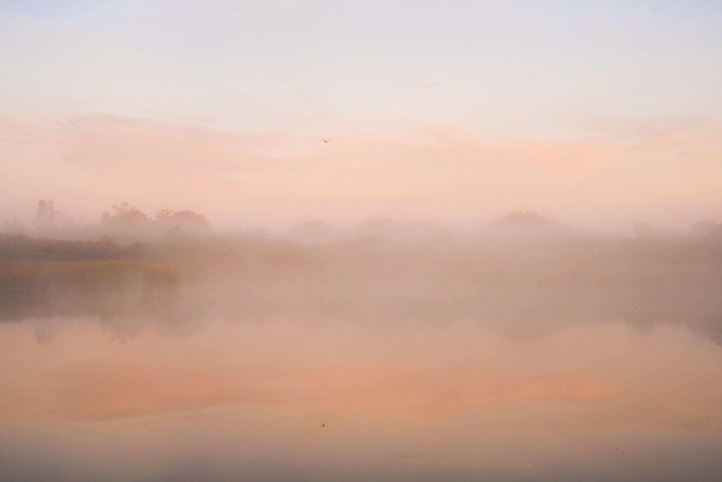 Sesachacha Creek II - Bird