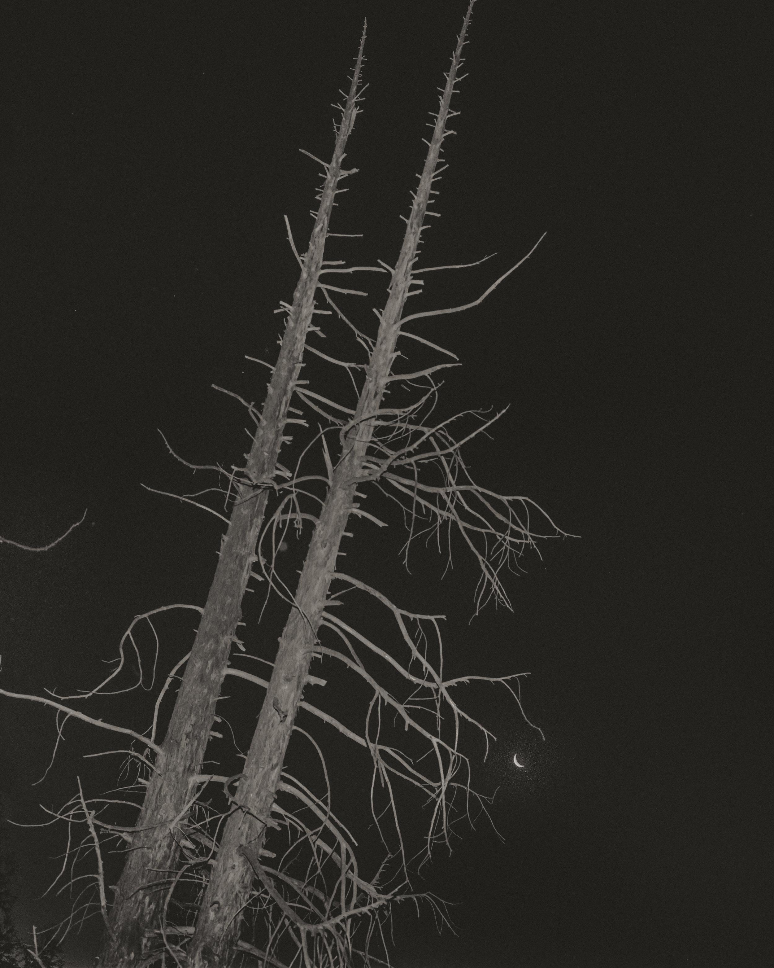 pialigoredwood004.jpg