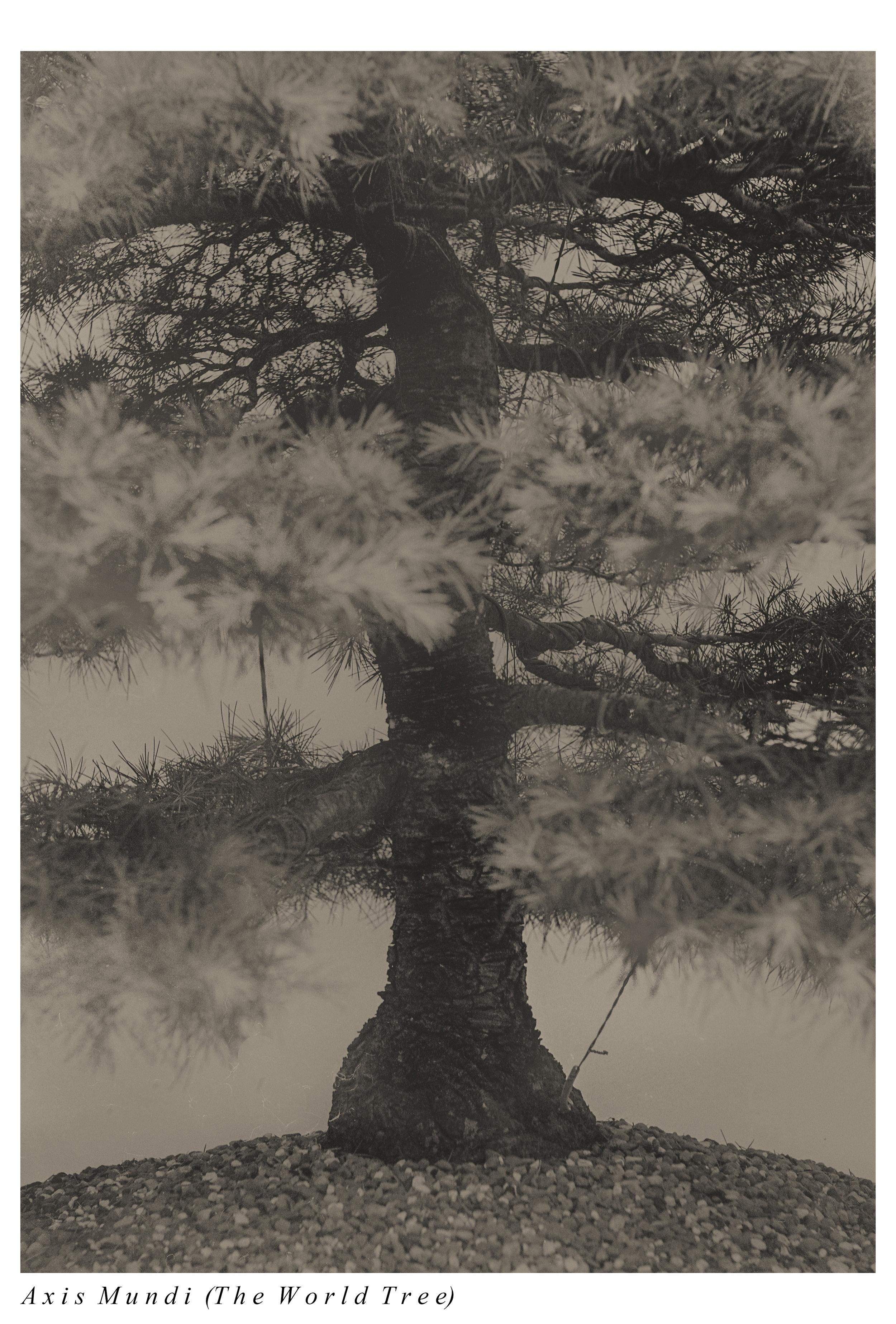 worldtree copy.jpg