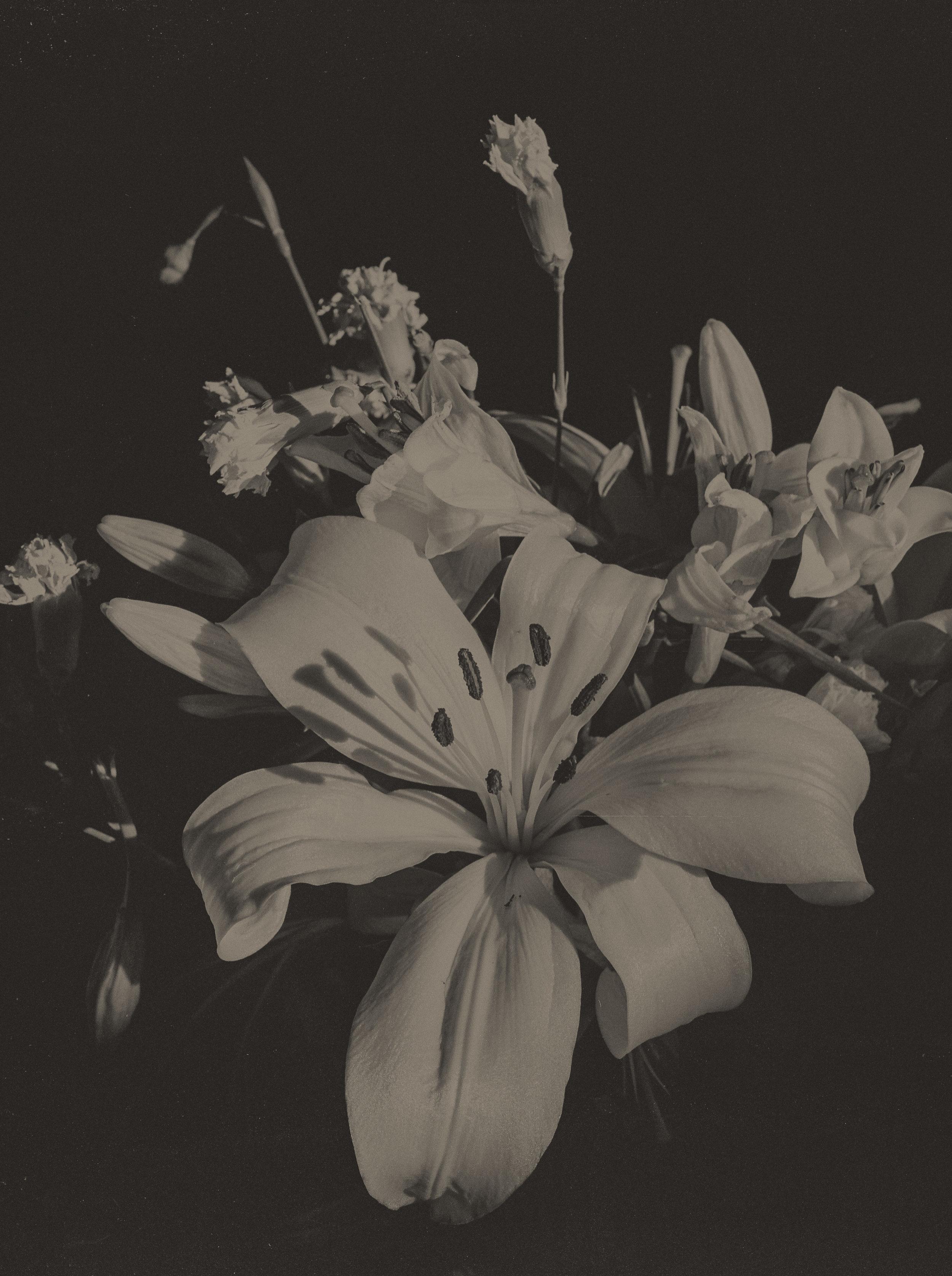 bastingsplants009.jpg