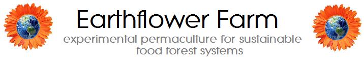 earthflower farm text.png